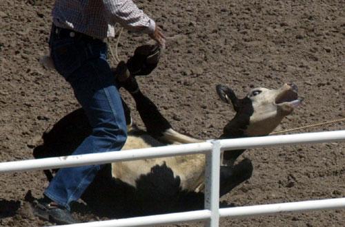 Calf_Roping_Rodeo_2