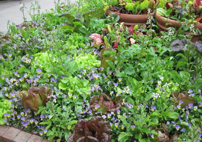 Integrated_garden