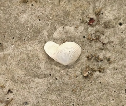 broken seashell