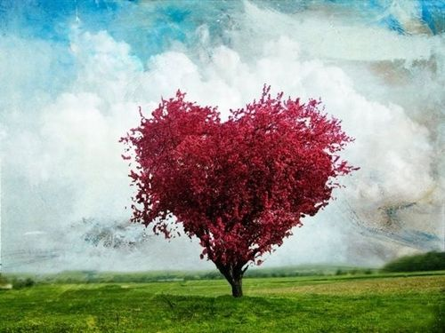 Hearts-in-Nature