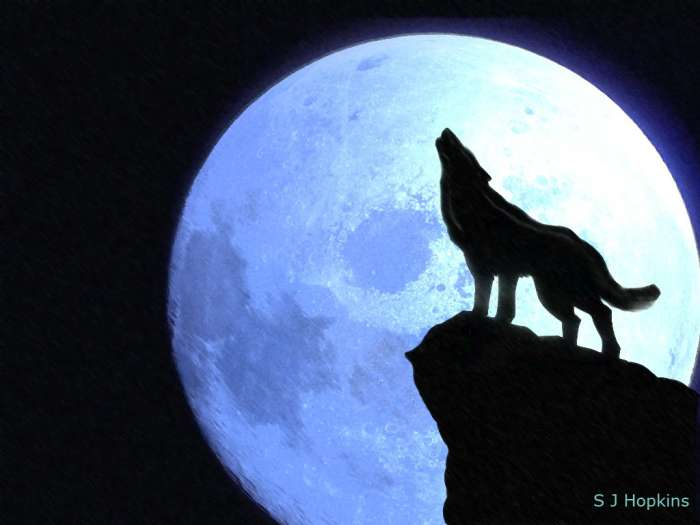 wolf howling at full moon S J Hopkins