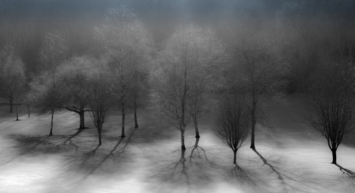 The-ghosts-of-trees-by-Paul-Lehane